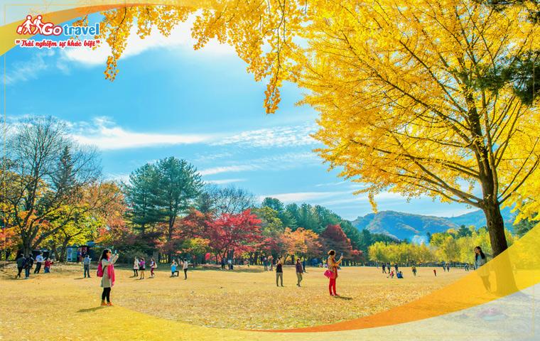 Tour Hàn Quốc: Seoul - Đảo Nami - Everland