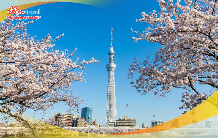 Tour Nhật Bản Mùa Hoa Anh Đào Khám Phá Narita - Mt Fuji - Tokyo