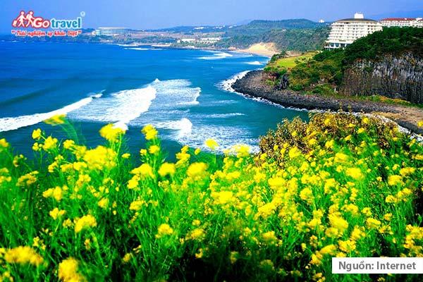 Hòn đảo Jeju xinh đẹp